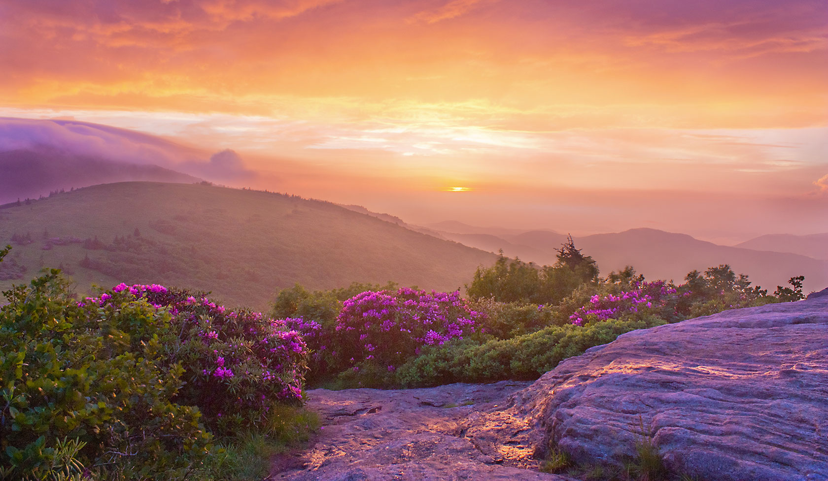 Summer in the Blue Ridge Mountains, North Carolina